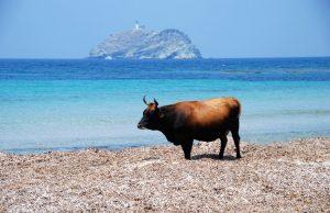 La spiaggia selvaggia di Barcaggio con la Giraglia sullo sfondo